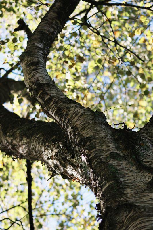 copperandgold.de | ines | botanischer garten solingen